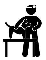 Mit dem Zwergpinscher zum Tierarzt: Krankheiten
